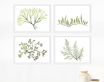 Seaweed Botanical Print Set - Any FOUR Watercolor Art Prints / 8x10 OR 8x11 Coastal Wall Art, Beach Decor