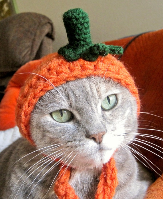 Knit pumpkin cat hat