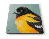 Oriole art, song bird painting, black and orange bird portrait, 6x6 square canvas original