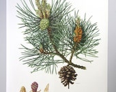 pulldown canvas Pine tree print poster chart wall hanging amazing german original