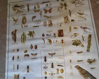 School Wall Pull Down Chart HArmful Insects & Birds Denoyer Geppert vintage
