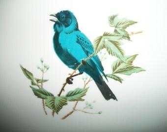 Mr. Bluebird, Vintage Bird Platter, Bluebird