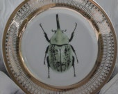 Gold Bug / Insect Plates, Beetle Plates, Bug Dishes, Bug Tableware, Insect Entomology Dishes, Available in Silver, Simple Band etc.
