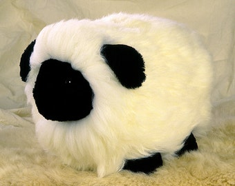 Sweetest Merino Sheep You ever Saw