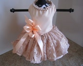 Dog Dress   Peach With Gold Lace  By Nina's Couture Closet
