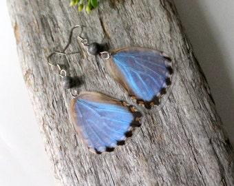 Light Blue Butterfly Earrings, Morpho Portis Butterfly, Real Butterfly Earrings, Butterfly Jewelry