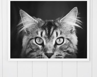 Black and White Cat Photo, Maine Coon cat print, Maine Coon Photo, animal art print, Cat Print, cute kitten, cat art, nursery decor