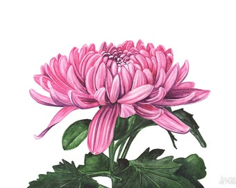 Chrysanthemum print of watercolor painting A4 size, C6916, chrysanthemum watercolor, mothers day gift, Chrysanthemum watercolor painting