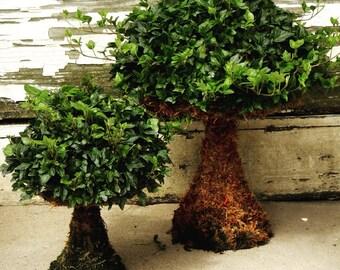 Moss Mushroom Topiaries