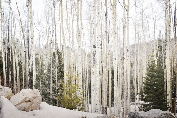 Aspen Trees Photography Print Fine Art New Mexico Rustic Woodland Forest Southwest Winter Landscape Photography Print.