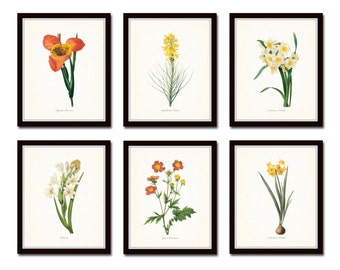 Botanical Garden Print Set No. 16, Redoute Botanical Prints, Giclee, Art Print, Antique Botanical Prints, Flower Prints, Wall Art, Print Set