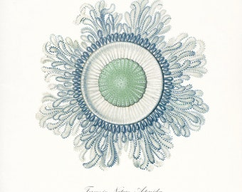 Coastal Decor Fantasy Sea Life Art Print, Natural History Nautical Wall Decor Jellyfish No. 5
