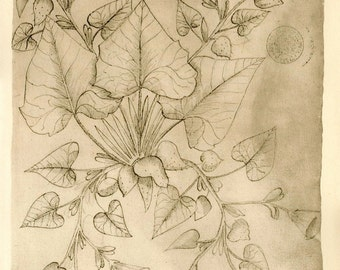 Vintage Botanical Print Sketch Drawing Plant Maranaho, Retro Home Decor, Wall Hanging