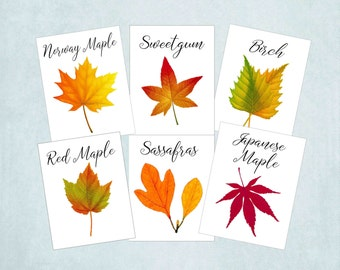 Autumn Leaf Table Numbers, Fall Leaf Table Tents, Autumn Wedding Table Cards, Thanksgiving Table Card, Autumn Fall Event, Harvest Table A109