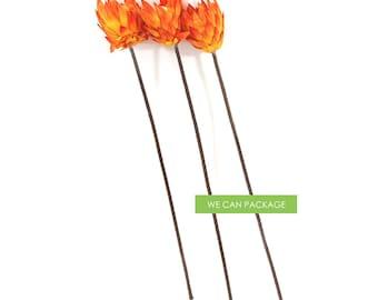 Orange Protea Sprays for Wedding Decor, Craft and Floral Arrangement - Pack of 3