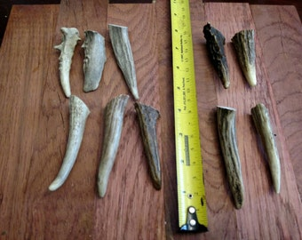 10 gnarly deer antler tips / tines