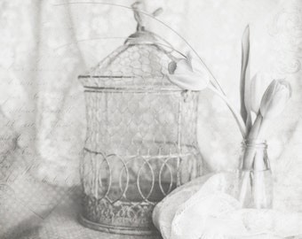 Tulips, Birdcage, Lace, Still Life, Black and White photo, Fine Art Photography, 11x14
