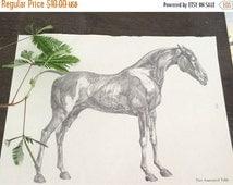 Columbus Day Sale- 10%Off Vintage Horse Anatomy/ Horse Skeleton Book Plate, Macabre Decor