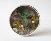 Succulent Moss Terrarium in Miniature Magnet