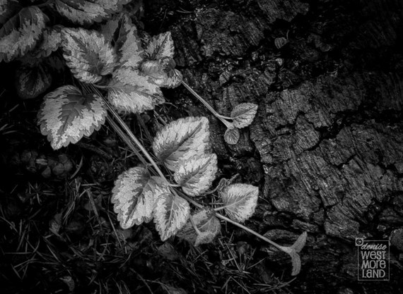 Black & White Photography The Forest Floor Garden