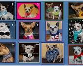 E Book of 12 Dog Collar Crochet Patterns  - Instant Download E Book