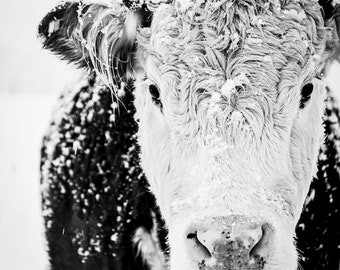 Cow Art, Cow Print, Large Wall Art, French Country Decor, Black and White Cow, Winter Art, Farmhouse Decor, Rustic Decor, Fine Art Print