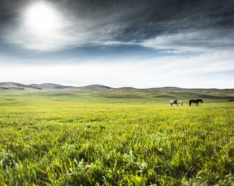 Landscape print of horses in the distance. Peaceful nature photography zen wall art. Prairie scenery in Mongolia Mongolian travel home decor