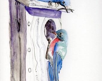 Watercolor Painting-Bluebird-Nature Art-Original Art by Diann