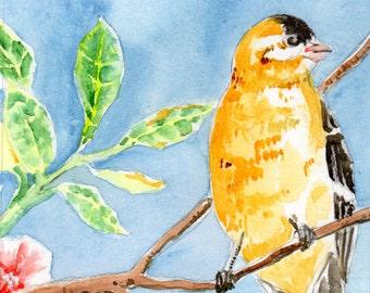 Watercolor Painting-Finch Art-Nature Art-Bird Art-Original Art by Diann