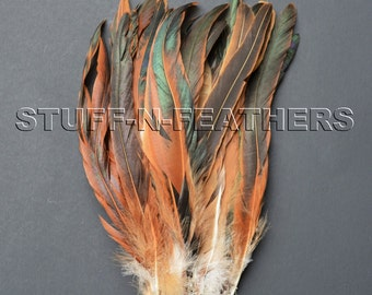 Natural iridescent brown black long rooster tail feathers HALF BRONZE Coque feathers for millinery, crafts / 8-10 in (20-25cm) long / F141-8