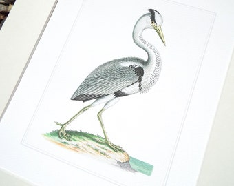 White Crane 5 with Pale Blue Water Fine Art Archival Print