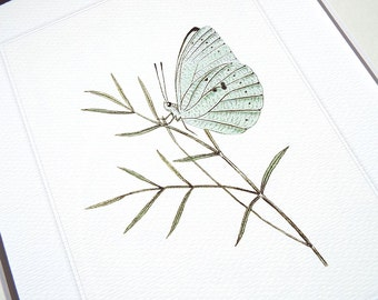 Pale Green Butterfly on Leaf Stem Naturalist Study Fine Art Print on Watercolor Paper