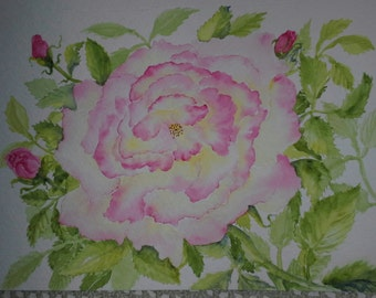 Cabbage Rose watercolor greeting card