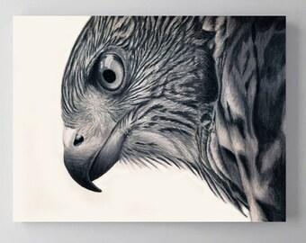 Cooper's Hawk Bird Art, Metal Print Wall Art, Colored Pencil Drawing, Wildlife Artwork,
