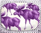 Moose, radiant orchid moose melamine platter