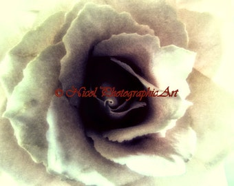Rose photography Antiqued Ivory Rose Matted Picture Art Print Cottage Chic ivory cream A451