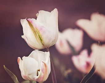 Tulips in Yard - Nature Photography, Mothers Day, Pink, Spring, Botanical, Floral, Pink Flowers, fleurs