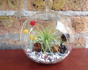 Easy Care Minimalist Air Plant Terrarium - A Unique Christmas or Holiday Gift