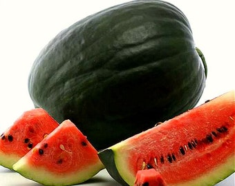 Black Diamond, heirloom watermelon, 20 seeds, non GMO, huge fruits, super sweet and juicy, southern climate, record breaker!