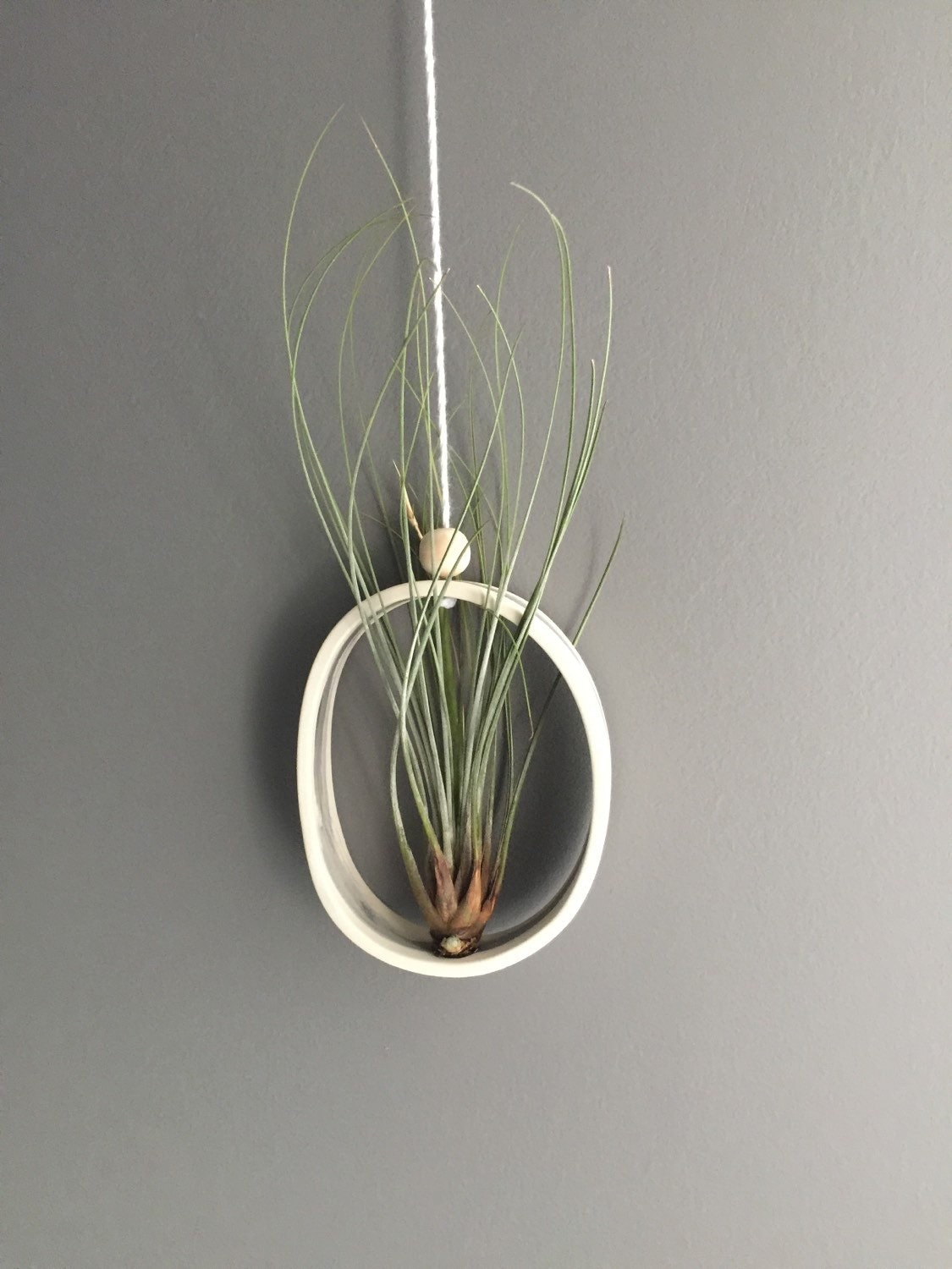 Airplant Cradle Sling Hanging Planter Display For By