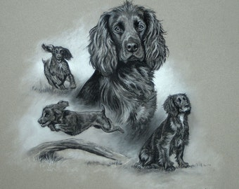 Beautiful Cocker Spaniel gun dog limited edition fine art mounted dog print ready to frame print from an original chalk and charcoal sketch