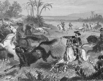 SOUTH AMERICA Lasso Hunt Guacho Hunting Horses - 1865 Antique Original Print Steel Engraving SCARCE