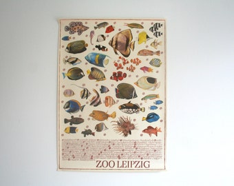 Original Zoo Advertising Poster- Leipzig (GDR/East Germany) 1970s- Fish design (P106)