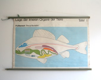 Vintage. Pull down chart. Mid Century. Educational. German DDR. Biology. School. Science. Poster. Canvas. Fish (412)