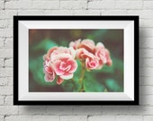 Blossom Pink Rose, Fine Art Print, Nature Photography,  Wall Art, Dreamy, Flower, Wall Deco, Home Deco, Floral, Rose