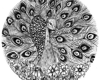 Peacock circular black and white hand drawn A4 art illustration Print
