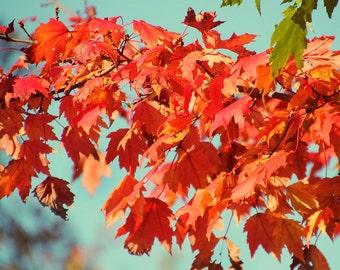 Fall Foliage, Fall Trees Print, Fall Print, Autumn Print, Orange Leaves Print, Orange Leaves Photo, Autumn Trees Print