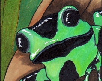 ACEO - Original Art Card - Green-Black Poison Dart Frog, hand-drawn