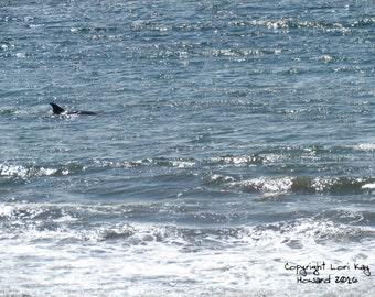 The Dolphin Fine Art Photography