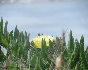 Yellow Flower Fine Art Photography